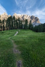 Meadow Path Leading to Larch trees, Julian Alps