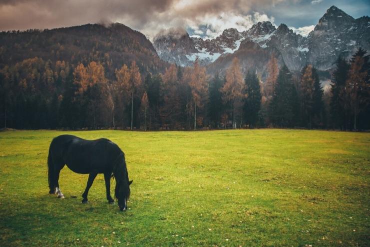 Horseback riding in Slovenia.